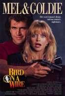 Affiche du film Comme un oiseau sur la branche