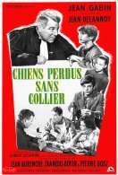 Affiche du film Chiens Perdus Sans Collier