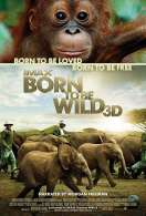 Born to Be Wild 3D, le film