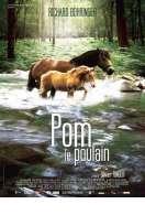 Affiche du film Pom Le Poulain