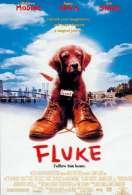 Affiche du film Fluke