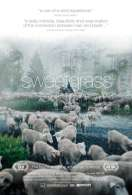 Sweetgrass, le film