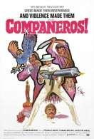 Affiche du film Companeros