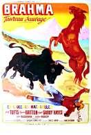 Affiche du film Brahma Taureau Sauvage