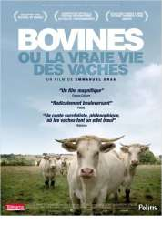 Affiche du film Bovines