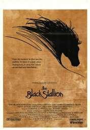 Affiche du film L'étalon noir