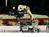 Photo du film Garfield