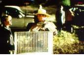 Photo du film La nuit des chauves-souris